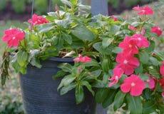 Fleur dans le pot sur l'air Photographie stock libre de droits