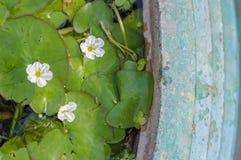 fleur dans le pot vert grunge Photographie stock libre de droits