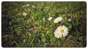 Fleur dans le pré Photographie stock