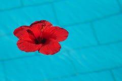 Fleur dans le pul Images libres de droits