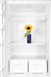 Fleur dans le réfrigérateur Image libre de droits