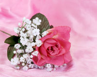 Fleur dans le rose Photographie stock