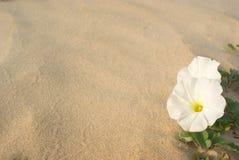 Fleur dans le sable Images libres de droits