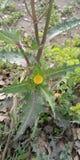 Fleur dans le sauvage photos stock