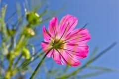 Fleur dans les sunshines. Photo libre de droits