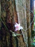 fleur dans mon jardin Image libre de droits
