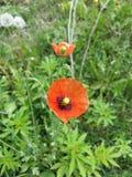 Fleur dans sauvage Photos libres de droits