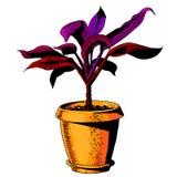 Fleur dans un flowerpot Vecteur de couleur illustration de vecteur