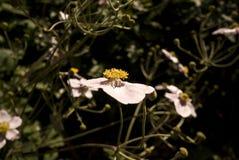 Fleur dans un jardin Image libre de droits
