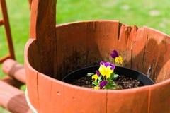 Fleur dans un seau en bois Photos libres de droits