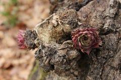 Fleur dans un tronc Photo libre de droits