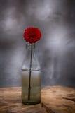 Fleur dans une bouteille en verre Images libres de droits