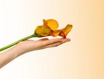 Fleur dans une main. Photo stock
