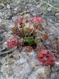 Fleur dans une roche Photographie stock libre de droits
