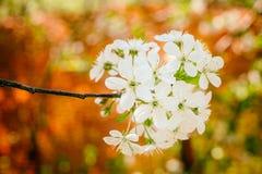 Fleur de fleur Image stock