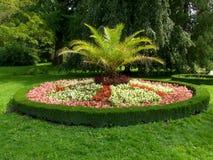 fleur de bâti Photos libres de droits