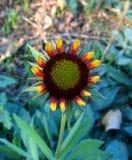Fleur de bébé Photo stock