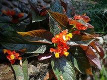 Fleur de beauté au parc de nation Photographie stock