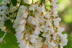 Fleur de beauté Juste plu en fonction Photo libre de droits