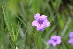 Fleur de Beautilful Photographie stock