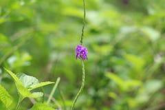 Fleur de Beautilful Images stock