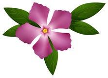 Fleur de bigorneau dans la couleur rose Photo libre de droits