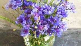 Fleur de bleuet de vase sur le fond concret gris banque de vidéos