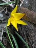 Fleur de bois de construction Image libre de droits