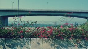 Fleur de bord de la route Image libre de droits
