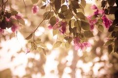Fleur de bouganvillée images libres de droits