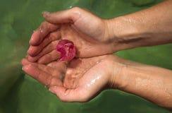 Fleur de bouganvillée dans l'eau Photographie stock