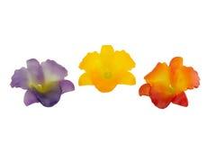 Fleur de bougie Photo libre de droits