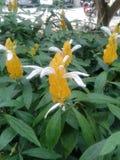 Fleur de bougie Image libre de droits