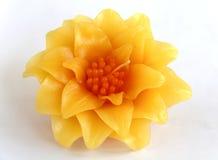 Fleur de bougie de Crassulaceae Photographie stock