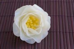 Fleur de bougie de gardénia Photos libres de droits