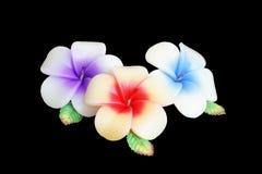 Fleur de bougie sur le noir - plumeria Images stock