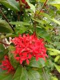 Fleur de bouton images stock