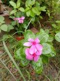 Fleur de bouton photographie stock