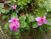 Fleur de bouton image libre de droits