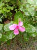 Fleur de bouton image stock