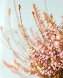 Fleur de bruyère d'hiver Photos libres de droits