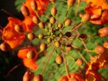 Fleur de cactus   Photos libres de droits