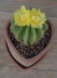 Fleur de cactus Photos stock