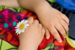 Fleur de camomille dans des mains de l'enfant Images stock