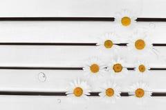 Fleur de camomilles images libres de droits