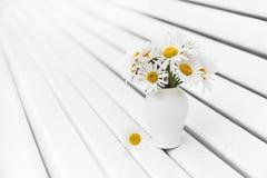 Fleur de camomilles photo stock