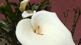 Fleur 2 de cartouche images libres de droits