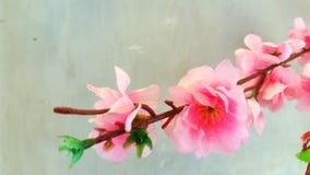 Fleur de cerise japonaise Images stock