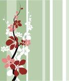 Fleur de cerise/pomme Image libre de droits