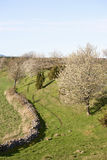 Fleur de cerisier au printemps Images stock